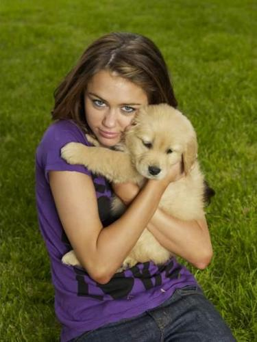 Hannah Montana fond d'écran possibly with a golden retriever and a great pyrenees called miley