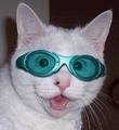 Cat with Goggles 哈哈