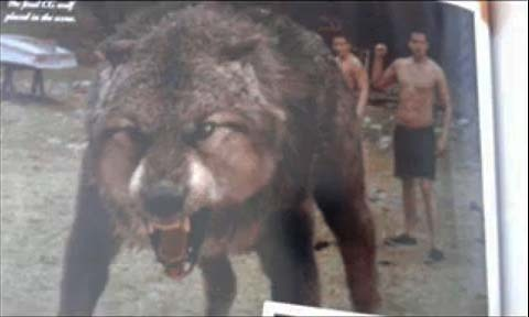 The Werewolf from Movie Companion
