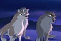 Wolf Quest - balto photo