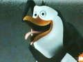 Funny face Rico - rico-the-penguin photo