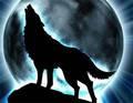 भेड़िया pic