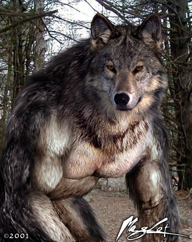 Nice werewolf - photo#13