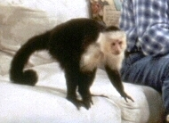 What's your fave TV or movie monkey? Poll Results ...