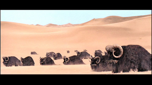 I am a Ox type creature and I am Transport for Tusken Raider (Sand people),What Am I?