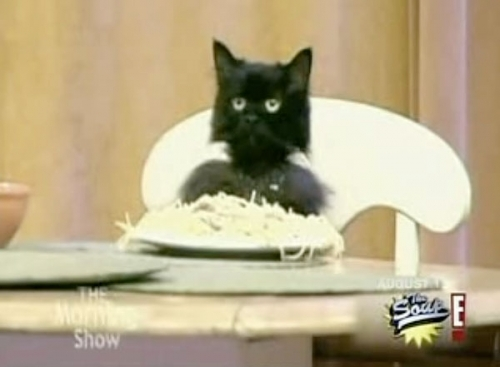 """In the """"I don´t care"""" video,after which verse the Spaghetti Cat shows up?"""