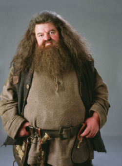 Which Professor taughtCare of Magical Creatutes before hagrid?