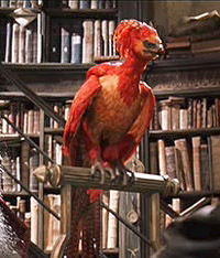 What is the name of Dumbledore's pet Phoenix?