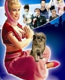 What does Jeannie's dog Djinn-Djinn hate?