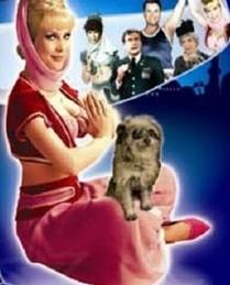 What does Jeannie's dog Djinn-Djinn hate?