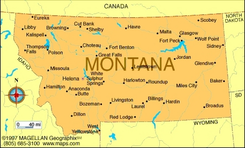 What is the state flower of Montana?