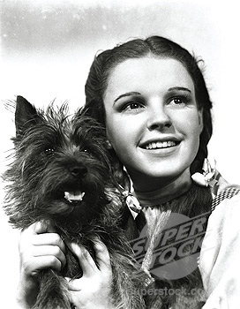 What did Dorothy say to Toto when they first heard the scarecrow speak?