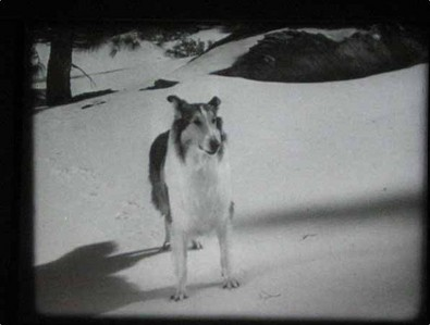 What was the original Lassie's REAL name?