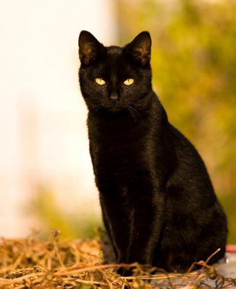 What was the name of Miss Prices' black cat?