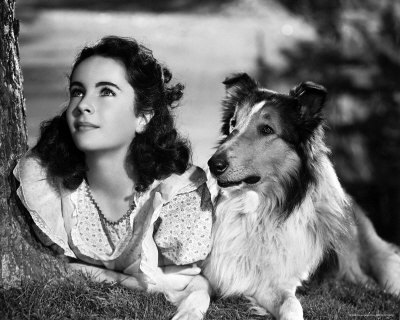 Dogs In Film - This dog made films with Elizabeth Taylor,What is her name?