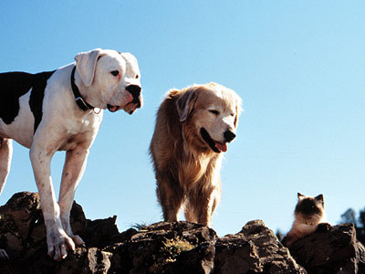 What Are The Two Dogs Names In Homeward Bound