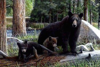 How many reported deaths in the US have there been since the year 2000 by bears?
