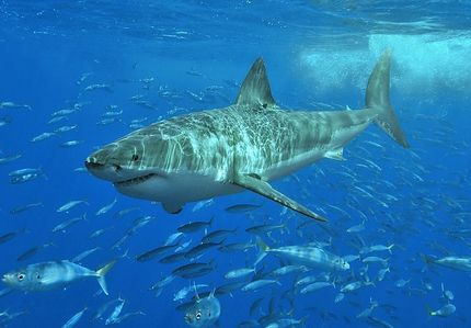 There were only 12 deaths from sharks in the 90's but how many of those were in Hawaii?