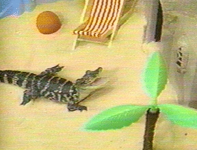 What's the name of Clarissa's alligator?