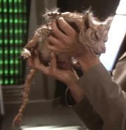 Which Star Trek animal is this?