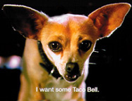 How many years did the last chihuahua that starred in the Taco Bell commercials, play the part?