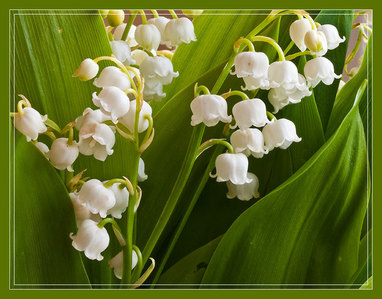 lily of the valley is symbol of which public holidays in France ?