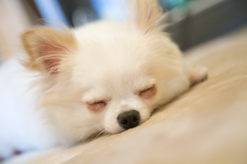 Gackt's beloved dog, recently passed away. What is this name of his NEW dog?