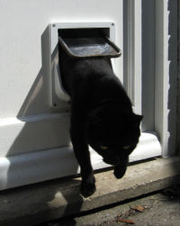 Who is generally acknowledged as having discovered the &#34;cat door&#34;?