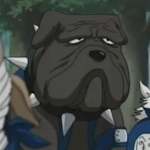 What is the name of this kakashi dog?