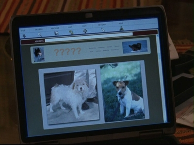 What's the website Richard uses to find the breed of the stray that showed up on his and Emily's porch?