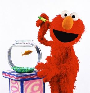What is the name of Elmo's goldfish in his Elmo's World segments?
