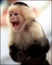 What is Marcel the monkey's real name?