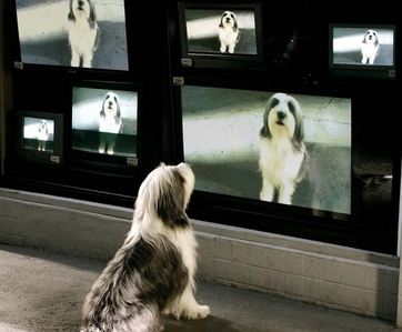 In what movie does this dog watch himself on television?