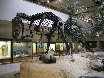 FOSSIL QUIZ: This fossil belongs to which dinosaur?