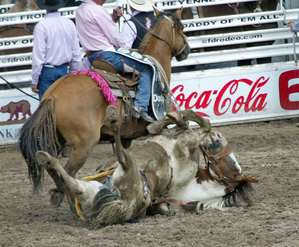 Animal Injured at Event that coca sponsors