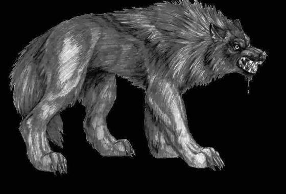 facts on half wolf demons dragons vs werewolves fanpop