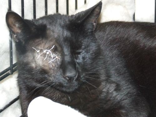 """My owner abused me, so I had to get stitches."""