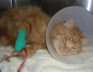 My owner had abused me, and broke my bones, please help.