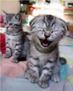 A cat laughing!!!!!!!!!! It was hard to find this pic XD