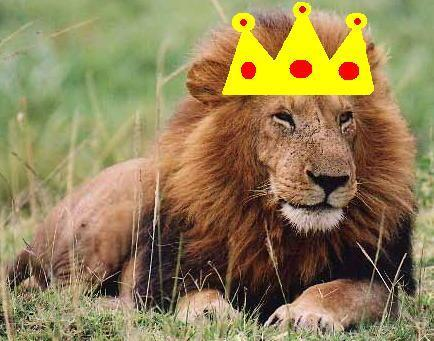 I Am Your KING!!!!!