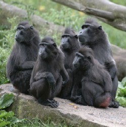 Monkeys live in groups called troopes.