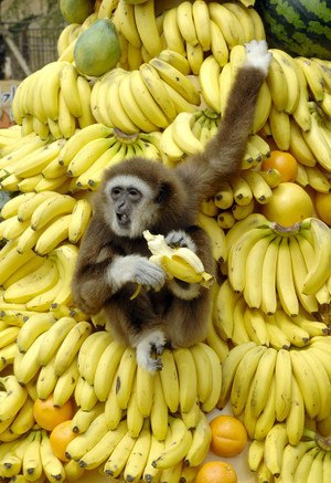 When monkeys peel bananas, they dont eat the skin. (smart monkeys)