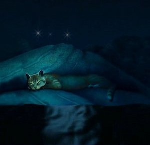 StarClan, the one hope left to cling to.