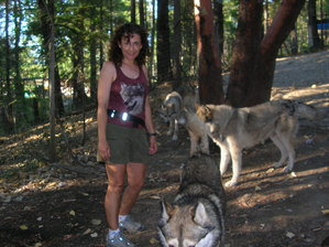 Eva volunteering at the serigala, wolf sanctuary.