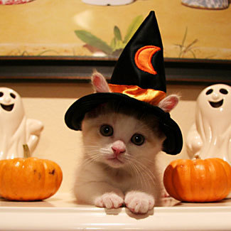 cute cat witch