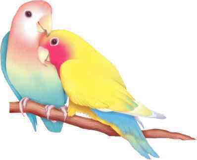 The Beautiful Creation Of Lovebirds