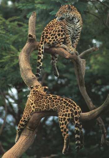 erlanbeispor: pictures of animals in rainforest