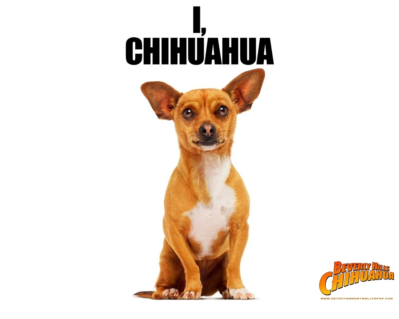 chihuahua movies movie dogs images beverley hills chihuahua hd wallpaper 4222