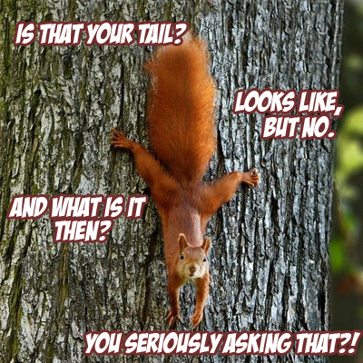 Squirrel's pe....tail.