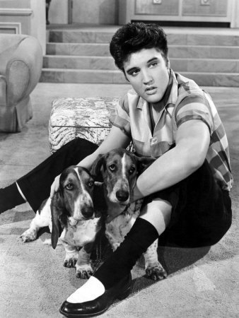 Elvis with hound dogs in JRock
